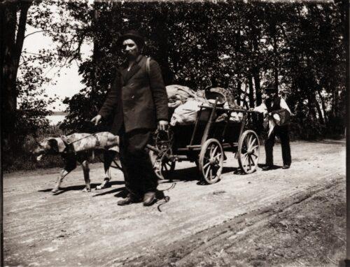 Berliner Lumpensammler nutzten bis in die 1950er Jahre das Hundefuhrwerk als Transportmittel.